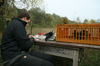 bird ringing table